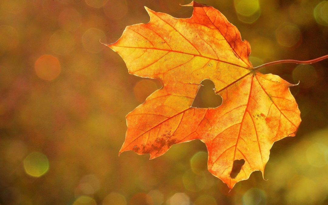 Herbstferien …